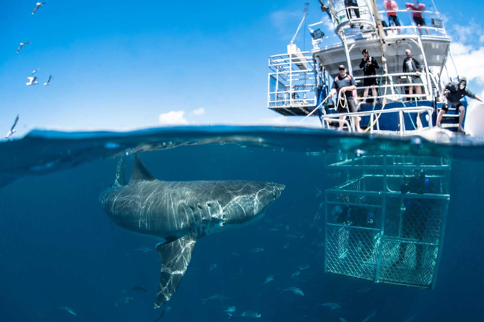Bagno con gli squali in sud Africa