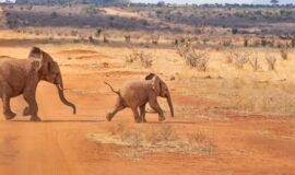 Tour del Kenya